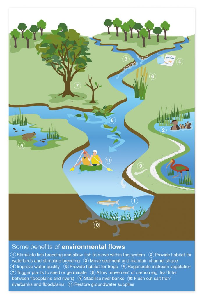 Benefits of environmental watering diagram
